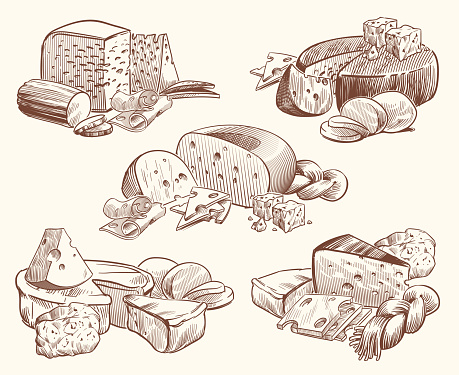 Sketch cheese. Art compositions with cheeses. Tasty brie, feta and parmesan slices gourmet appetizer. Doodle sketch vintage vector set