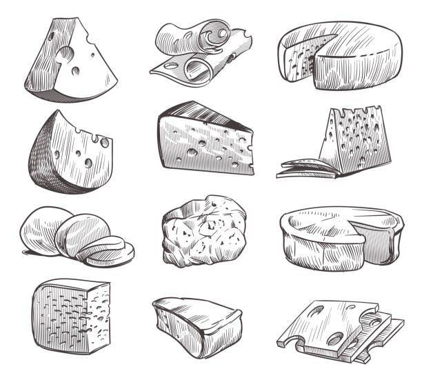 illustrazioni stock, clip art, cartoni animati e icone di tendenza di sketch cheese. various types of cheeses. fresh cheddar, feta and parmesan dairy snack. hand drawn retro vector isolated set - formaggio