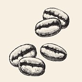 Vector illustration of coffee bean.