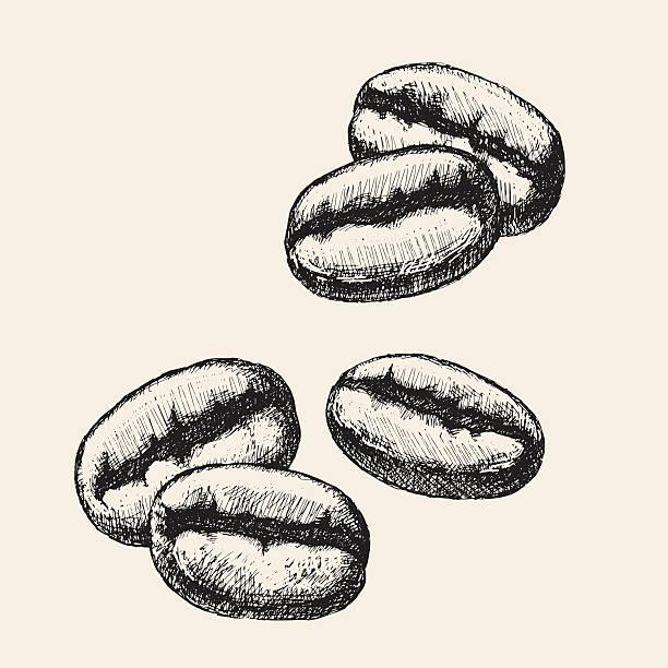 rys ziarna kawy - ziarno kawy palonej stock illustrations