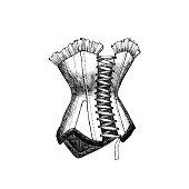Vector illustration of corset.