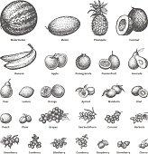 Sketch doodle hand-drawn set fruit