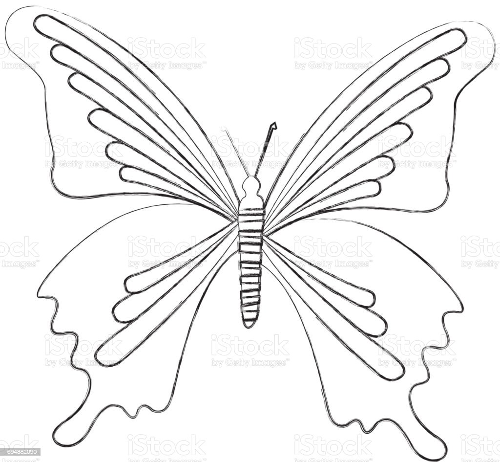 Sketch Draw Butterfly Cartoon Stock Vector Art More Images Of