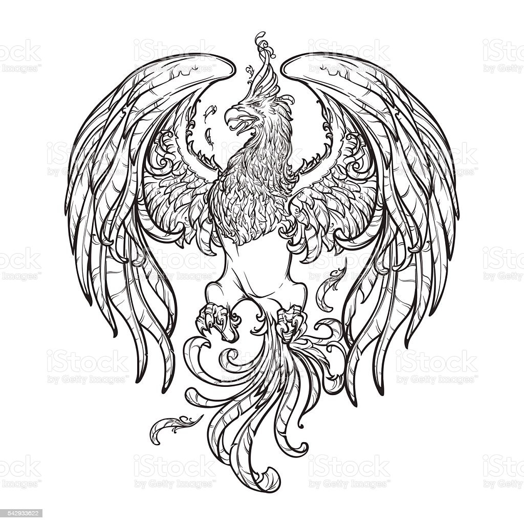 sketch drawing of phoenix isolated on white background
