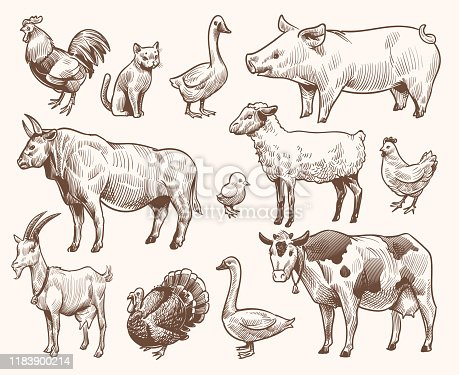 Sketch farm animals. Pig and cat, bull and cow, rooster and chicken, goat and ram, goose and turkey. Hand drawn engraving vector etching isolated natural farming set