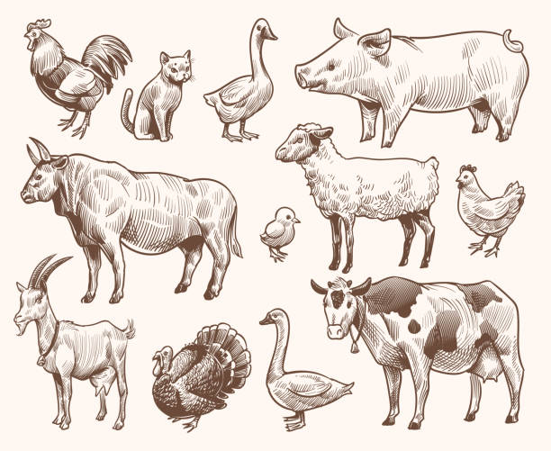 Sketch farm animals. Pig and cat, bull and cow, rooster and chicken, goat and ram, goose and turkey. Hand drawn engraving vector set Sketch farm animals. Pig and cat, bull and cow, rooster and chicken, goat and ram, goose and turkey. Hand drawn engraving vector etching isolated natural farming set farm animals stock illustrations
