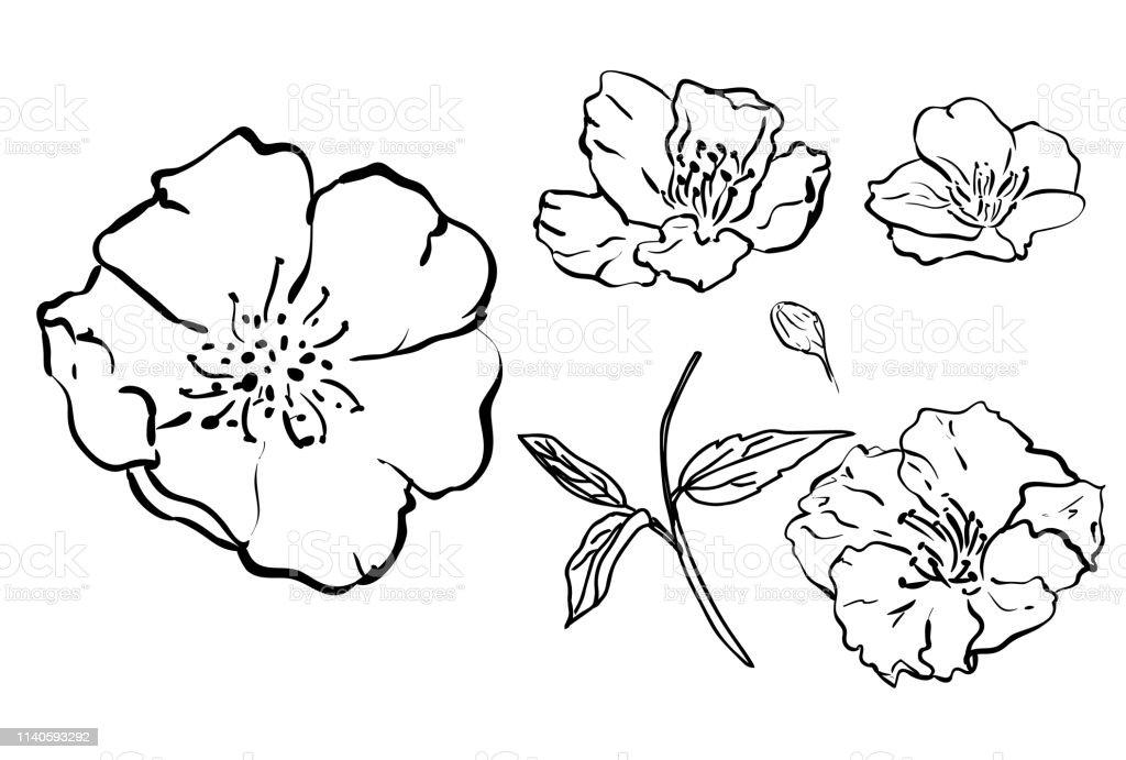 Croquis Floral Botanique Collection Dessins De Fleurs Noir