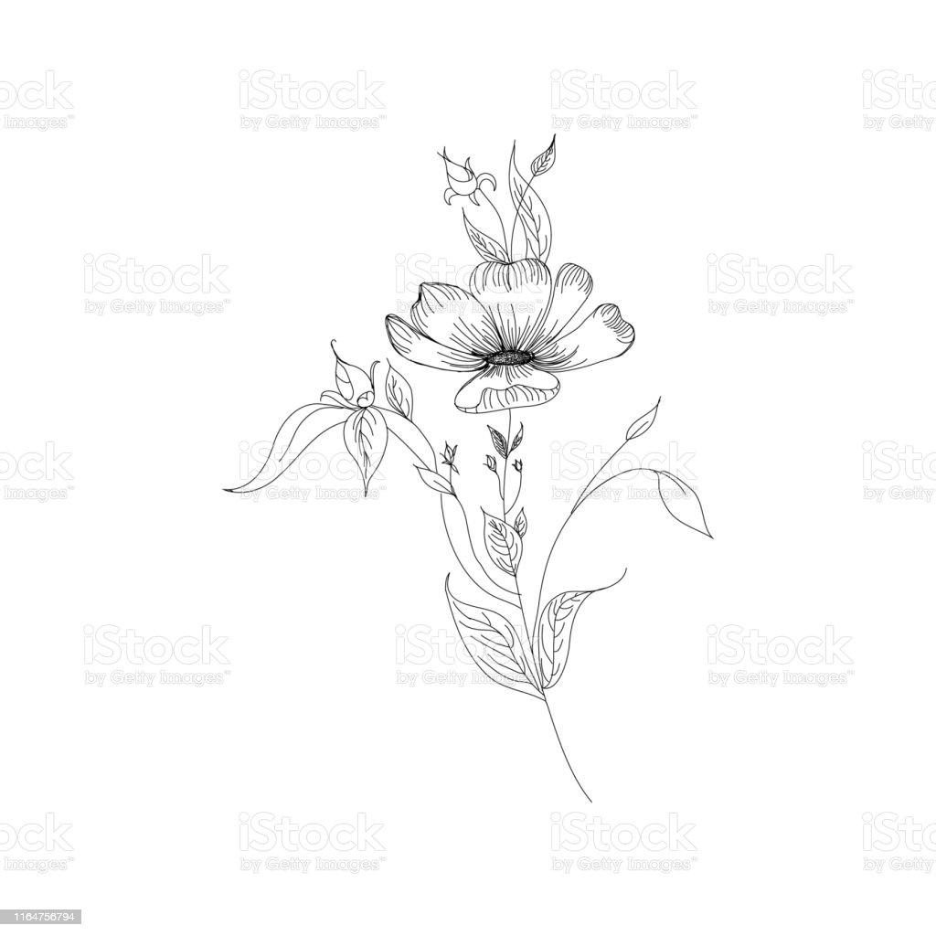 Vetores De Coleção Floral Do Botany Do Esboço Desenhos De