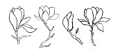 Sketch floral botany collection. Magnolia flower drawings.  Modern single line art, aesthetic contour. Black and white with line art on white backgrounds. Hand Drawn Botanical Illustrations.Vector.