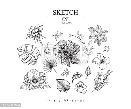 Sketch Floral Botany set. Fuchsia, Hibiscus, Apple, Anemone, primrose flower and leaf drawings. Black and white with line art on white backgrounds. Hand Drawn Botanical Illustrations.Vintage styles.