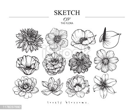 Sketch Floral Botany set.  Variety flower and leaf drawings. Black and white with line art on white backgrounds. Hand Drawn Illustrations. Vector. Vintage styles.