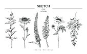 Sketch Floral set. Magnolia, Daisy, Veronica, Lupin, Peony, Wisteria  flower drawings. Black and white with line art on white backgrounds. Hand Drawn Botanical Illustrations.Vector.Vintage styles