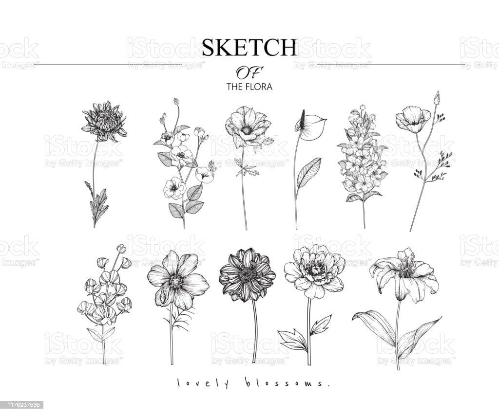 Schets Floral plantkunde set. - Royalty-free Achtergrond - Thema vectorkunst