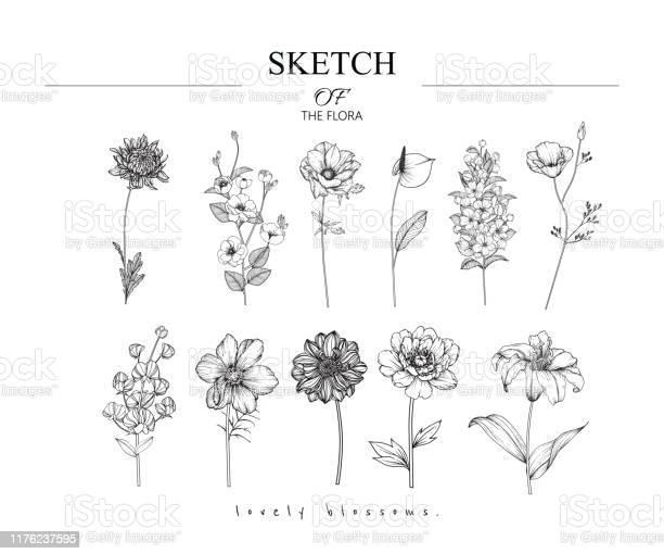 Schets Floral Plantkunde Set Stockvectorkunst en meer beelden van Achtergrond - Thema