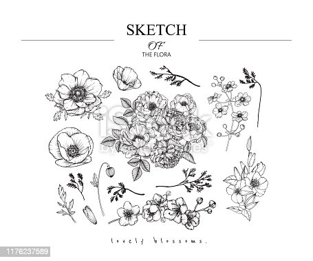 Sketch Floral Botany set. Peony,Anemone,Poppy,Primrose, Sakura, California poppy flower and leaf drawings. Black and white with line art on white backgrounds. Hand Drawn Illustrations.Vintage styles.