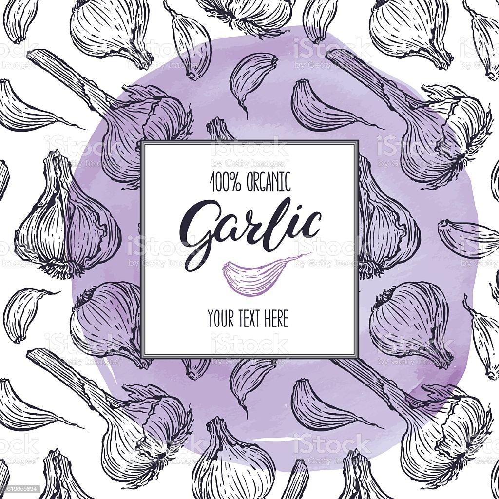 sketch frame of Garlic - ilustração de arte em vetor