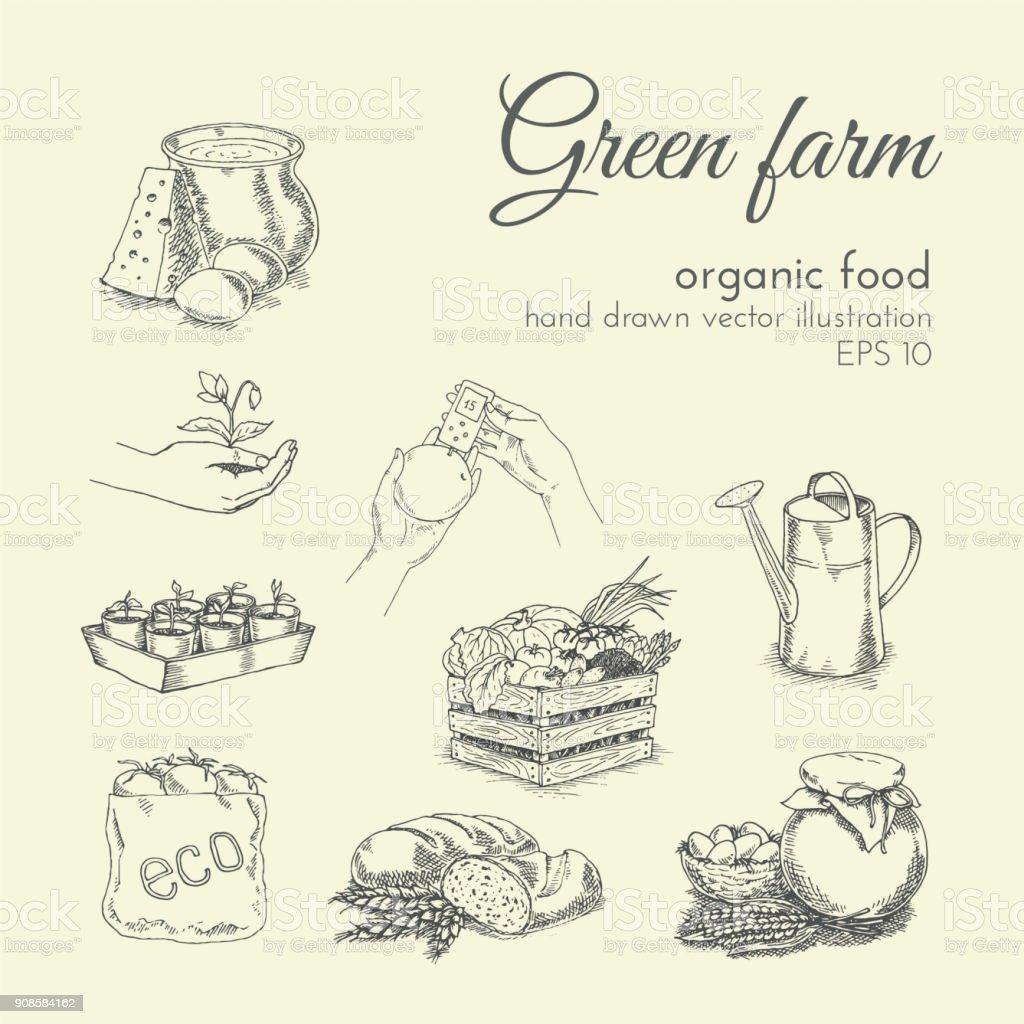 croqui de ilustração vetorial de mão desenhada de produtos orgânicos. comida saudável - ilustração de arte em vetor