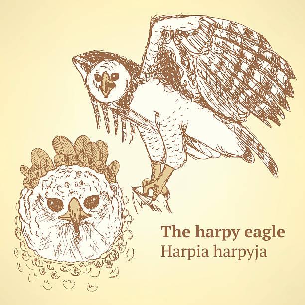 boceto harpia en estilo vintage de aves ilustracin de arte vectorial