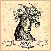 Sketch head of goat
