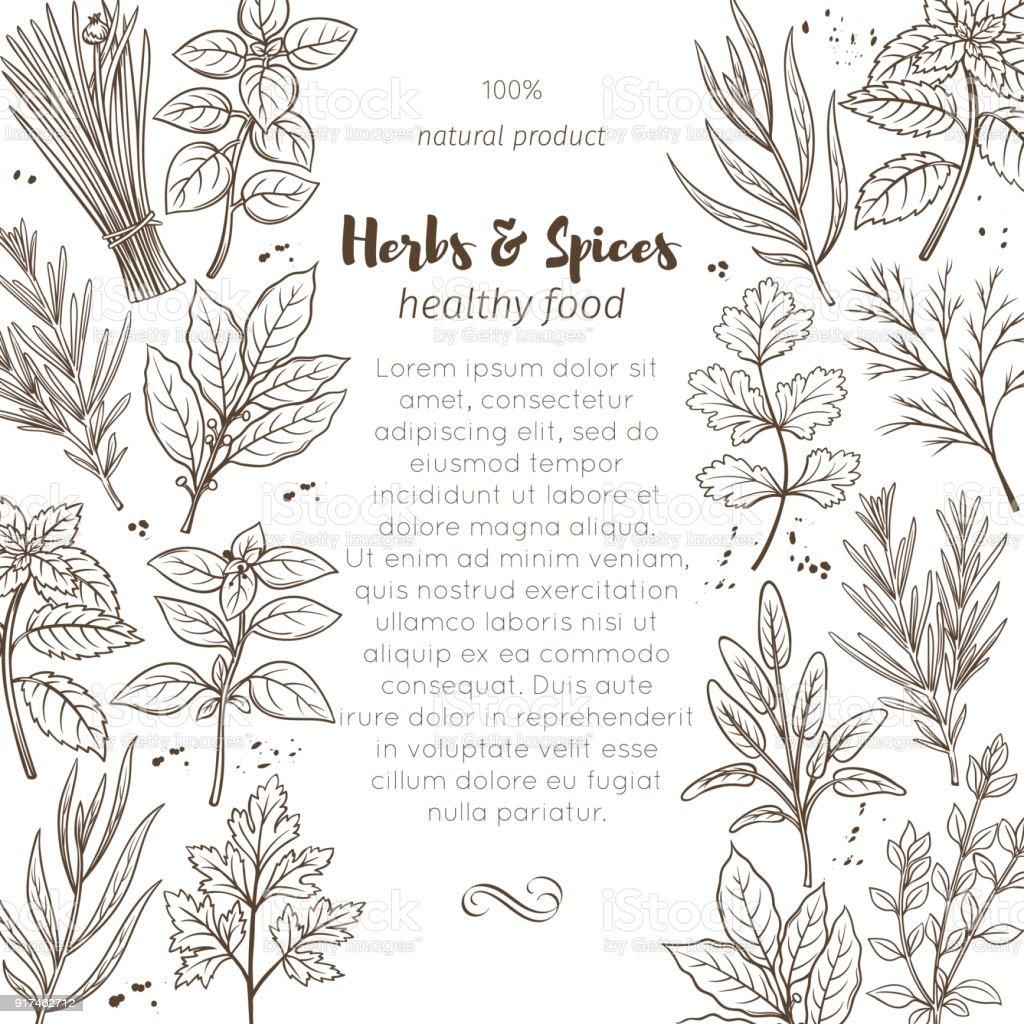 croquis des herbes et épices - Illustration vectorielle