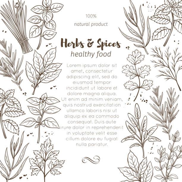illustrations, cliparts, dessins animés et icônes de croquis des herbes et épices - antioxydant