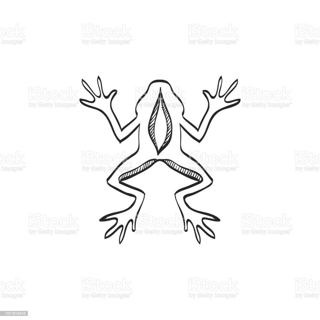 Sketch Icon Lab Frog Stock Vector Art & More Images of Amphibian ...