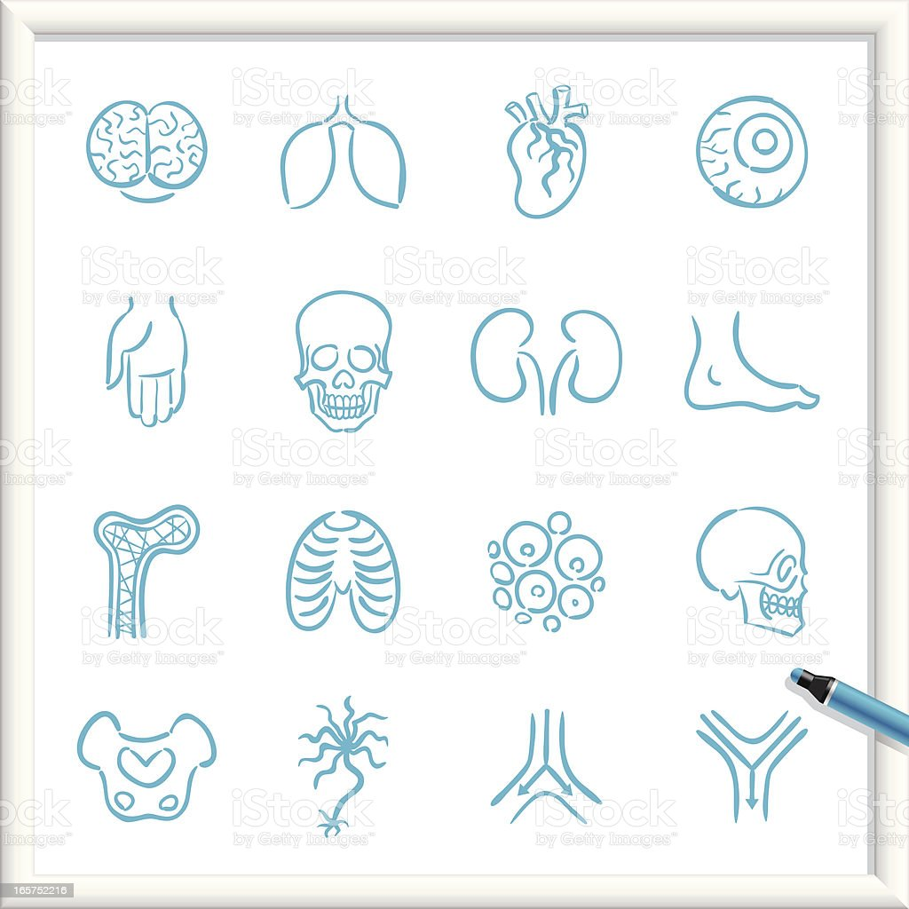 Sketch Icons - Anatomy vector art illustration