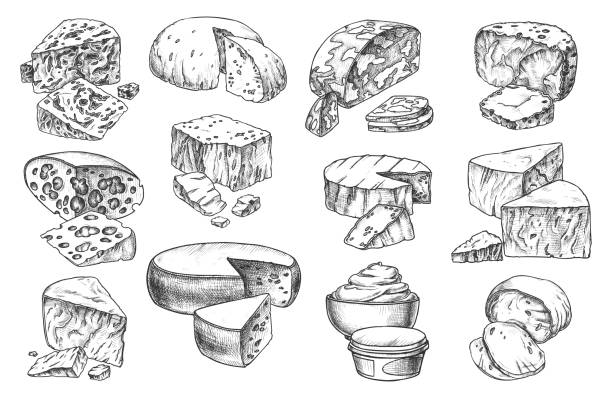 illustrazioni stock, clip art, cartoni animati e icone di tendenza di icone di schizzo di tipi di formaggio, interi e fette - maasdam