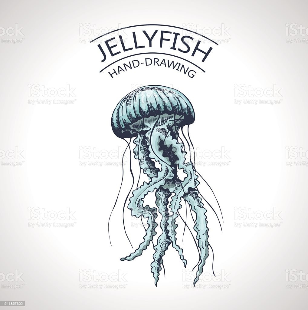 sketch isolated jellyfish vector art illustration