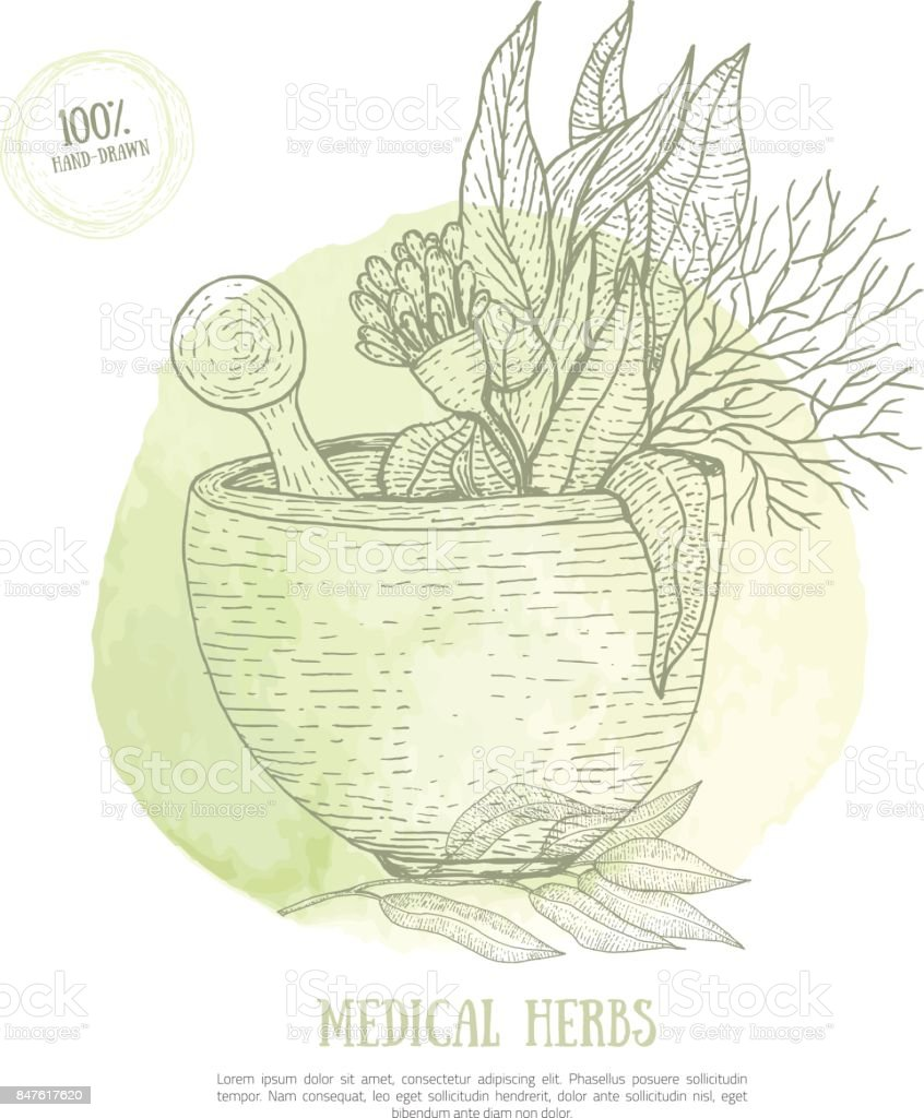 Sketch Mortar with fresh herbs eucalyptus isolated on green watercolor stain. Organic cure concept for ayurveda. Vector engraved sketch illustration vector art illustration