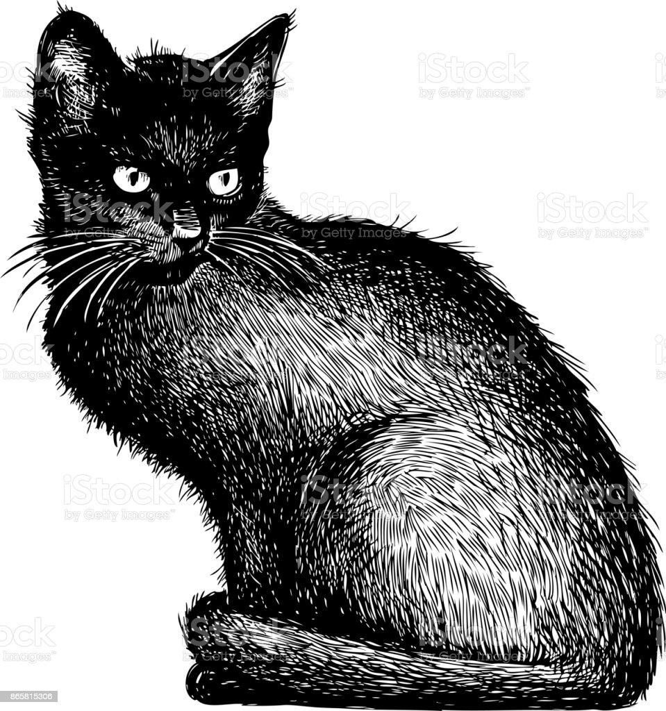 sketch of a black kitten vector art illustration