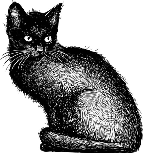 sketch of a black kitten - cat stock illustrations, clip art, cartoons, & icons