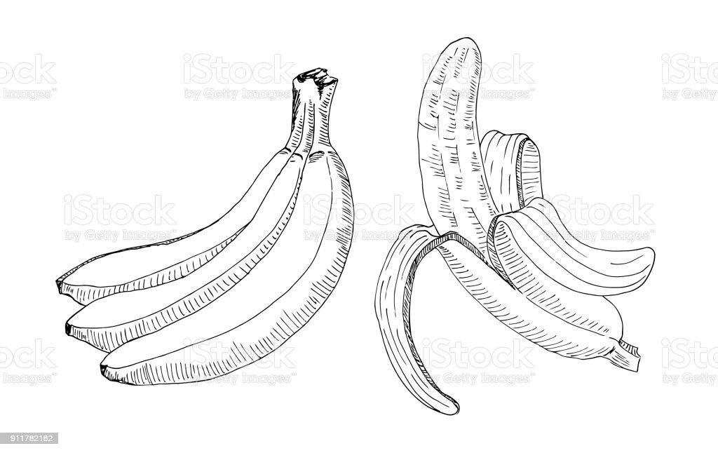 Sketch Of A Bunch Bananas And Peeled Banana Handmade Drawing With Marker