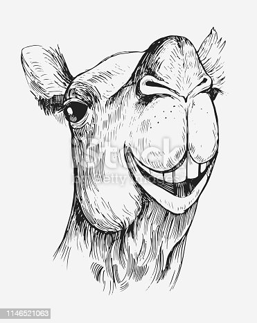 istock Sketch of a camel. Hand drawn illustration converted to vector 1146521063