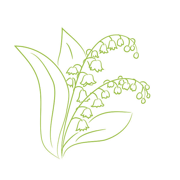 sketch of a flower lily of the valley sketch of a flower lily of the valley. vector illustration lily of the valley stock illustrations