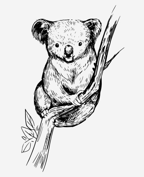 sketch of a koala bear. hand drawn sketch converted to vector - koala stock illustrations