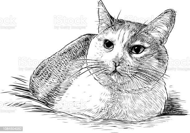 Sketch of a lying domestic cat vector id1084504052?b=1&k=6&m=1084504052&s=612x612&h=hphqa1uv flwkh3ojzm0kpilfnnnni06lx2a7knnz9y=