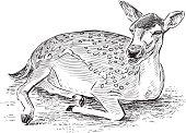 sketch of a lying roe deer