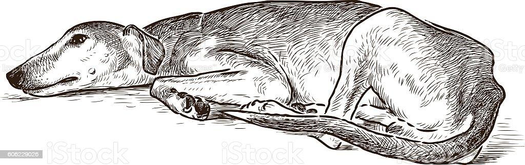 sketch of a resting greyhound vector art illustration