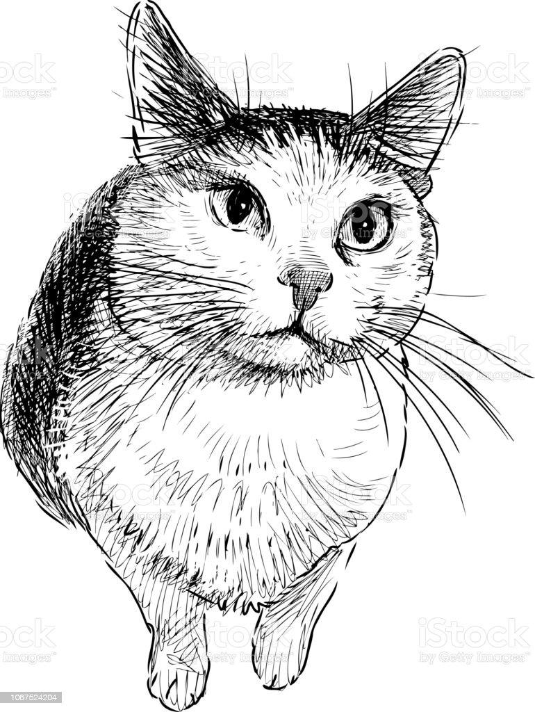 Sketch of a sad domestic cat vector art illustration