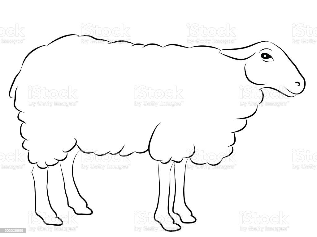 sketch of a sheep royalty free stock vector art