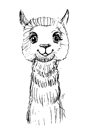 sketch of a smiling alpaca with black lines.