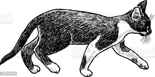 Sketch of a striding small kitten vector id943104040?b=1&k=6&m=943104040&s=612x612&h=akqallbjcaf227jn79bbvk9kyo6ne2sg jtbr5atjnc=