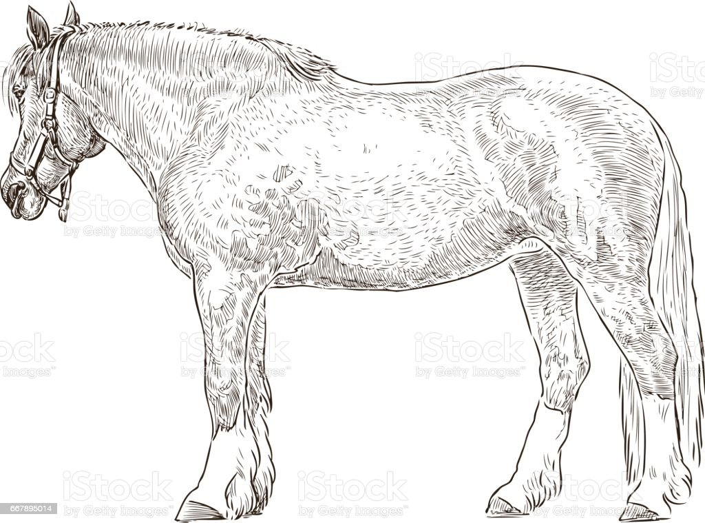 sketch of a tired harnessed horse royalty-free sketch of a tired harnessed horse stock vector art & more images of agriculture