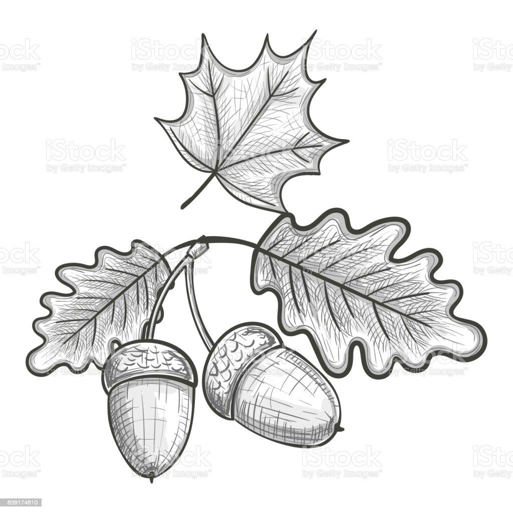 Oak Leaf And Acorn Drawing Sketch Of An Oak Leaf ...