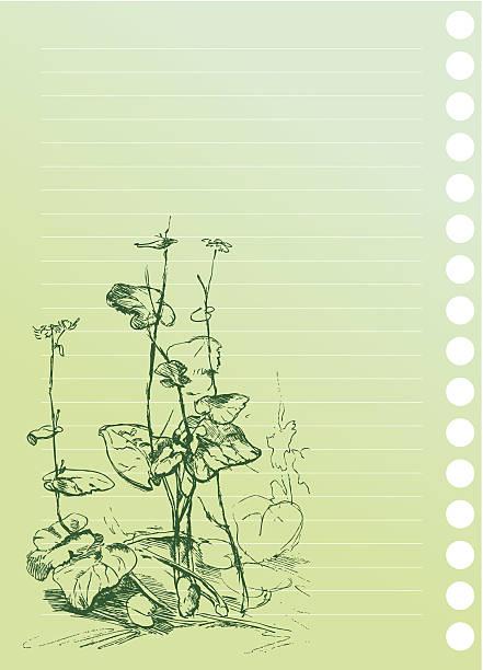 ilustrações de stock, clip art, desenhos animados e ícones de esboço de planta burdock em bloco do artista - lian empty