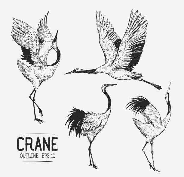 sketch of crane. hand drawn illustration converted to vector - crane bird stock illustrations