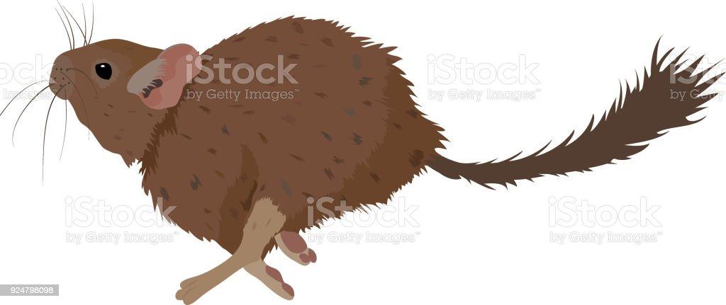 Esboço de gliroides roedor do animal de estimação. Ilustração vetorial - ilustração de arte em vetor