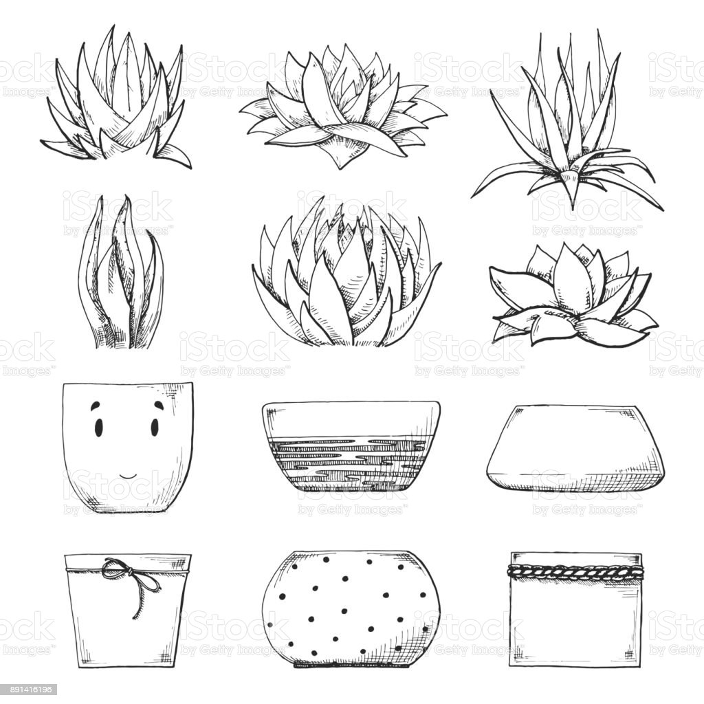 Sketch Of Different Pots And Succulents Vector