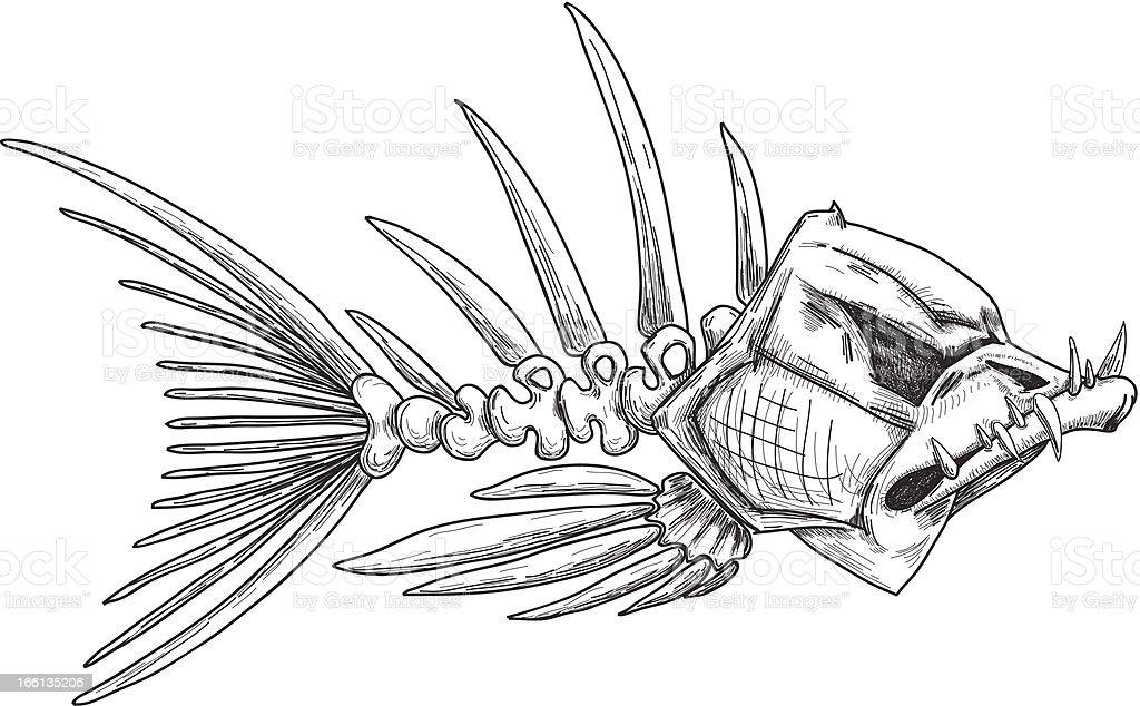 sketch of evil skeleton fish with sharp teeth royalty-free stock vector art